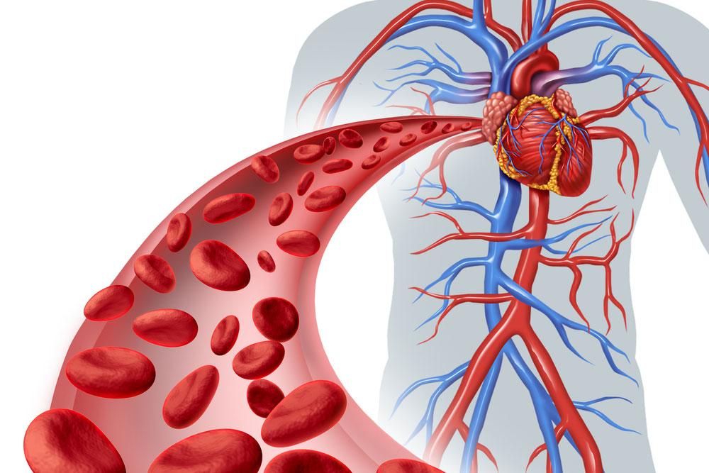 Tác dụng của massage đối với sức khỏe tim mạch