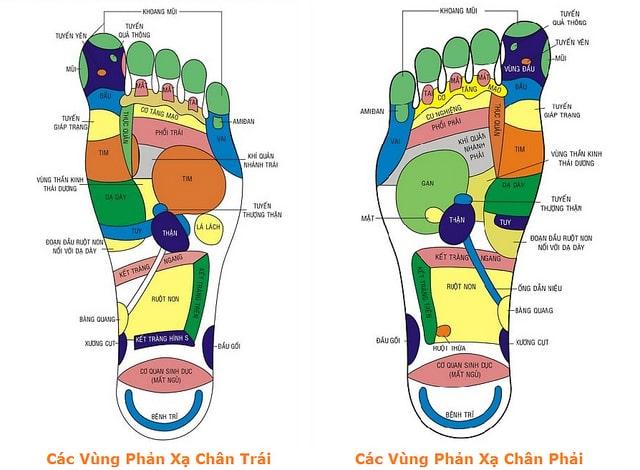 Các vùng phản xạ huyệt bànchân phải và trái